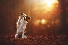 秋が来た!美しい紅葉の中で遊ぶ犬の画像15枚