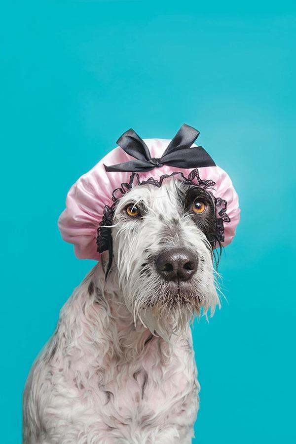 洗い立てだぜ!濡れた犬の写真シリーズ『Wet Dog』 (2)