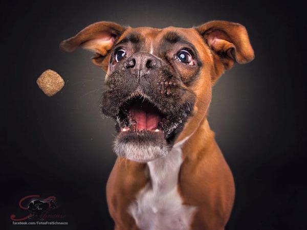 ハングリー精神!犬が獲物を食らう瞬間の静止画像がヤバイ (7)