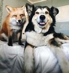 大好きすぎてこの笑顔。キツネとイヌの仲良しコンビ!