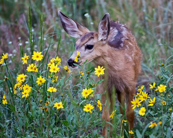 くんくん良い香り。花の匂いを嗅ぐ動物たちの画像 (17)