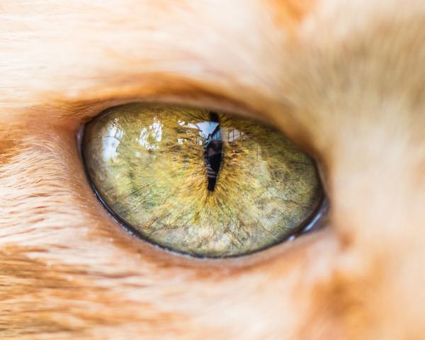 まさにキャッツアイ!綺麗な猫の瞳を撮影した画像16枚 (5)