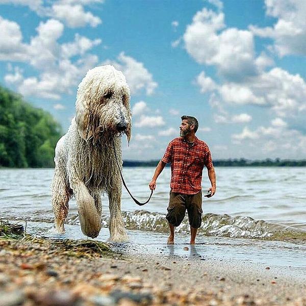 犬を大きくする!そんな夢をフォトショップの画像加工 (7)