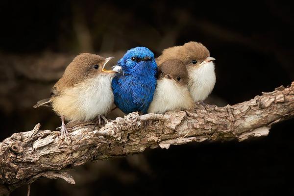 小鳥が温まる為に皆で寄り添っている可愛い画像 (15)