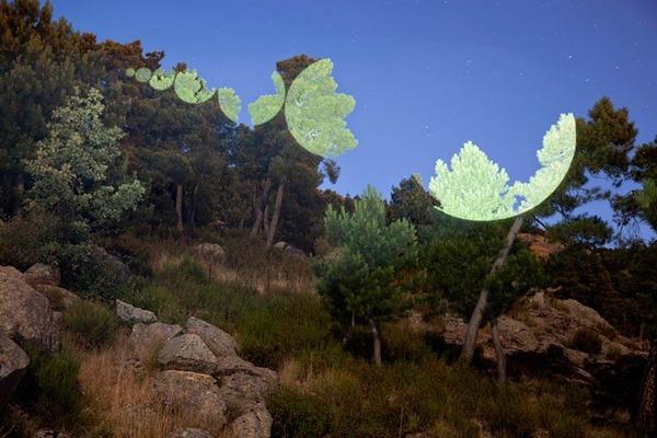 食いちぎられたかのように錯覚する木々