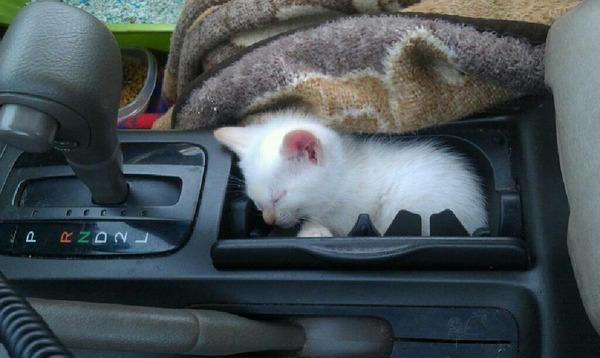 ジャストフィット猫 7