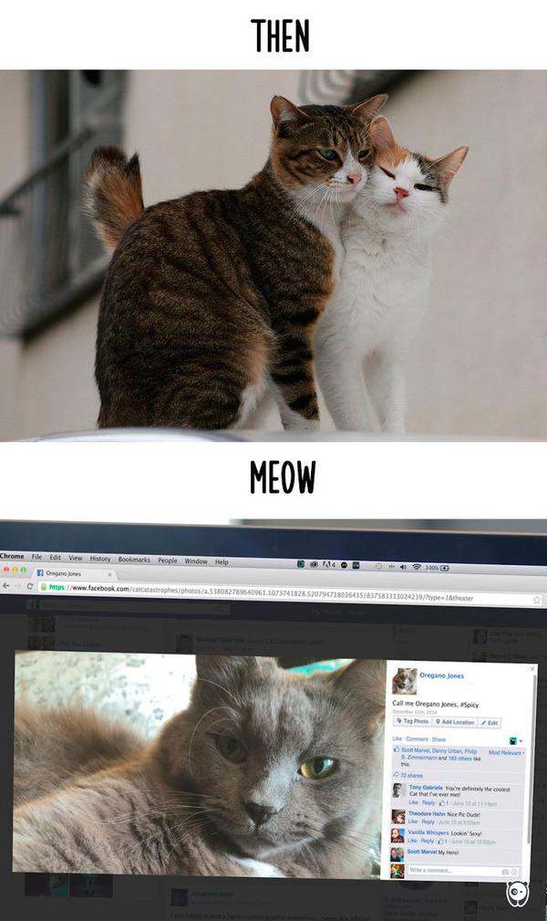 【猫画像】猫の生活を過去と現在で比較! (8)