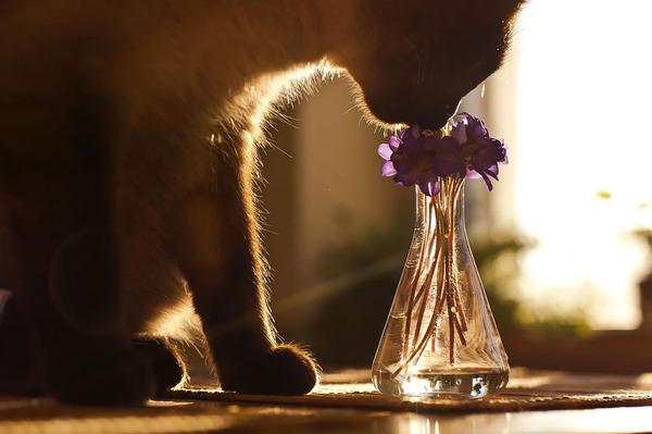 くんくん良い香り。花の匂いを嗅ぐ動物たちの画像 (41)