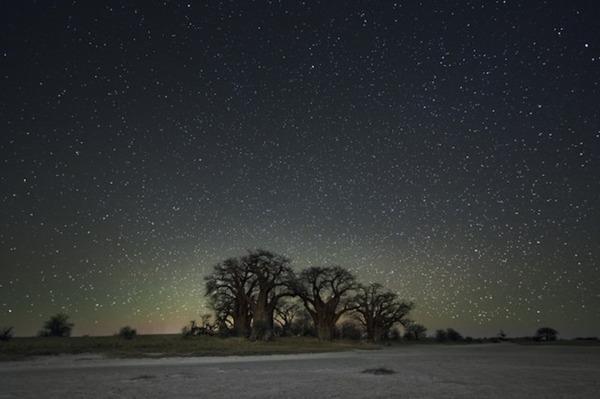 星空と古い木の美しい風景写真 11