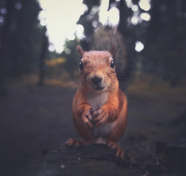キツネやリスと戯れようぜ!フィンランドの胸キュン野生動物 (1)
