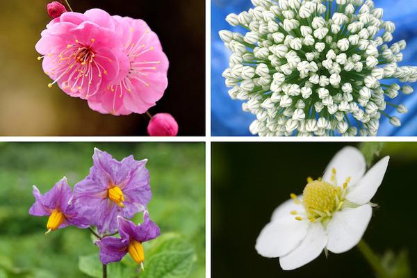 食べ物として食べちゃうけど実はとても綺麗に咲く花19選