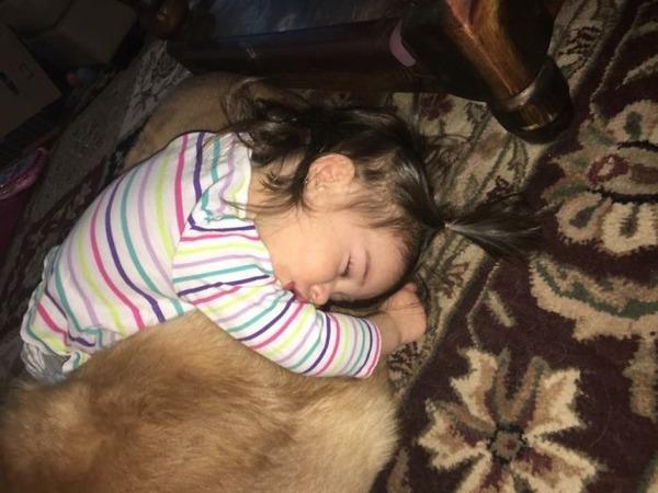 ペットは大切な家族!犬や猫と人間の子供の画像 (40)