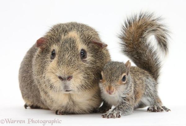 似てる!親が違うのにそっくりな動物画像30枚 (19)