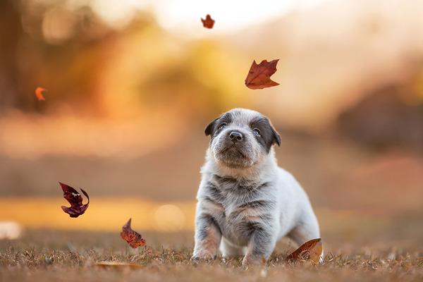 紅葉や秋の森の中を楽しむ動物たちの画像 (19)