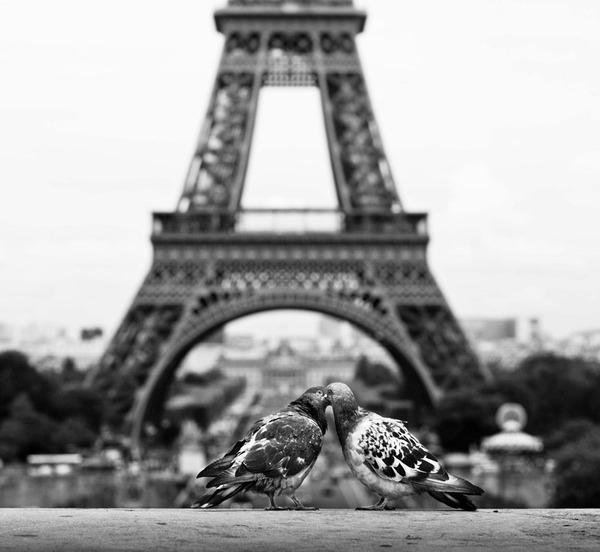 パリのハト