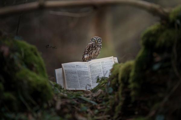 ファンタジック!森のキノコで雨宿りするフクロウの画像ほか (5)