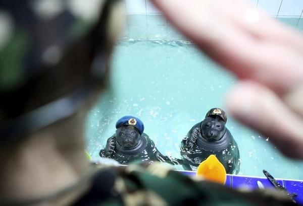 SEALS,ロシアのオットセイの軍事訓練、VEデー 5