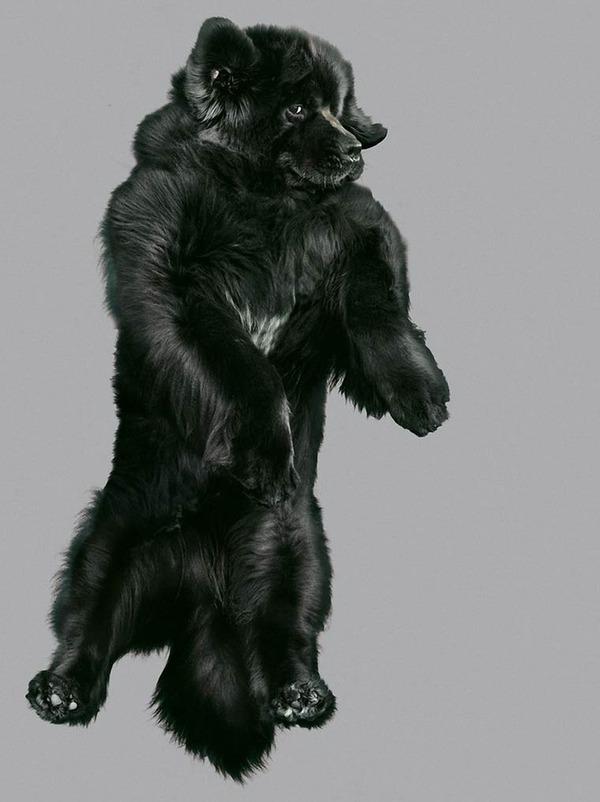 飛ぶ犬!空飛ぶわんこの絶妙な表情が逸品な写真 (8)