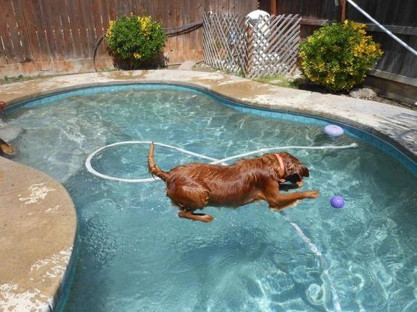 水の上を歩くことができる犬