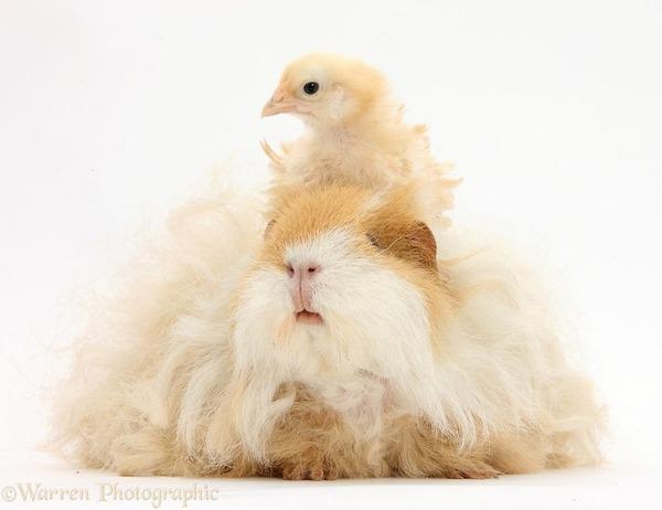 似てる!親が違うのにそっくりな動物画像30枚 (26)