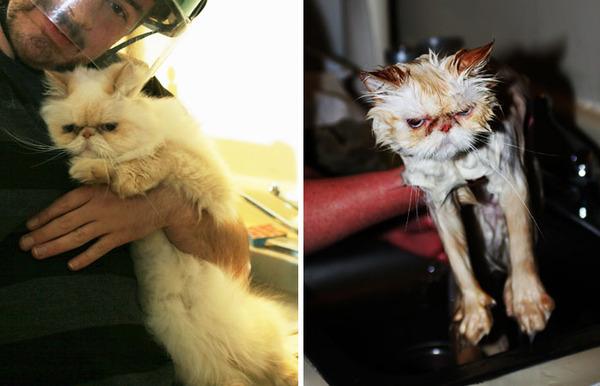 もふもふな動物たちがお風呂で変貌する…!【犬猫画像】 (19)