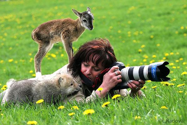 カメラに興味津々な動物の画像 (9)