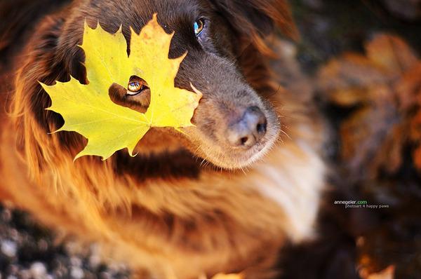 秋が来た!紅葉と遊ぶ犬画像 (11)