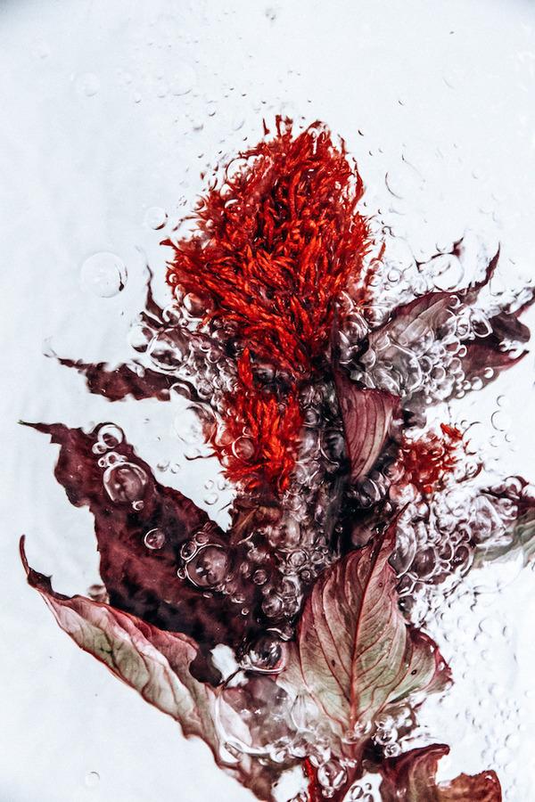 溺れる花の美しさ。花と水と泡の写真シリーズ『flotsam』 (5)