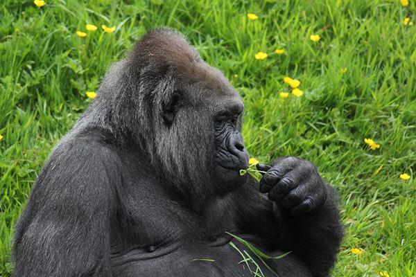 くんくん良い香り。花の匂いを嗅ぐ動物たちの画像 (28)