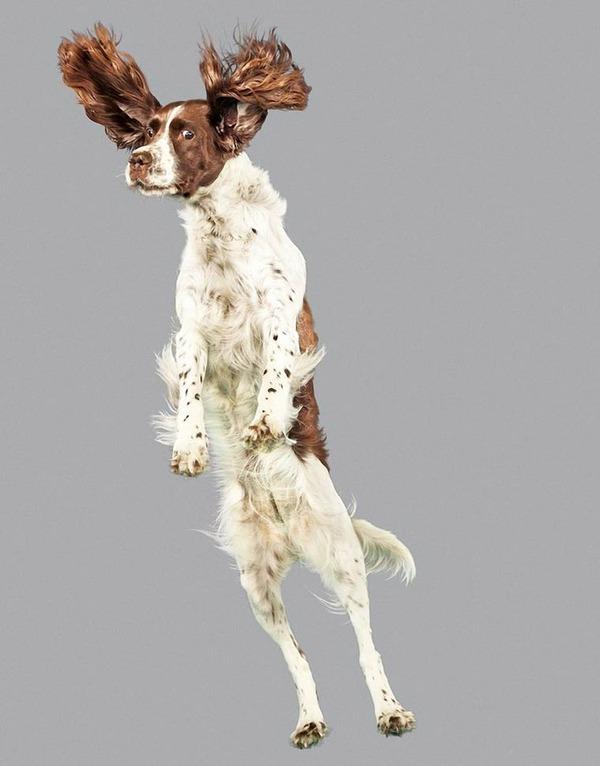 飛ぶ犬!空飛ぶわんこの絶妙な表情が逸品な写真 (16)