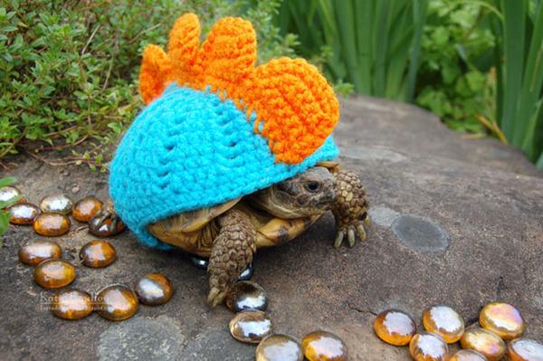 寒いからニットのセーターを小動物に着せてみた画像 (10)