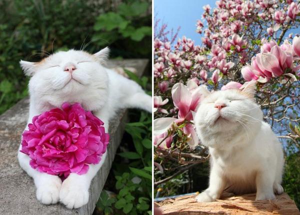 くんくん良い香り。花の匂いを嗅ぐ動物たちの画像 (5)