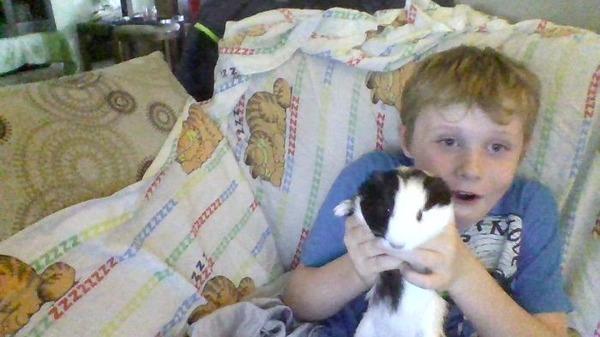 ペットは大切な家族!犬や猫と人間の子供の画像 (74)