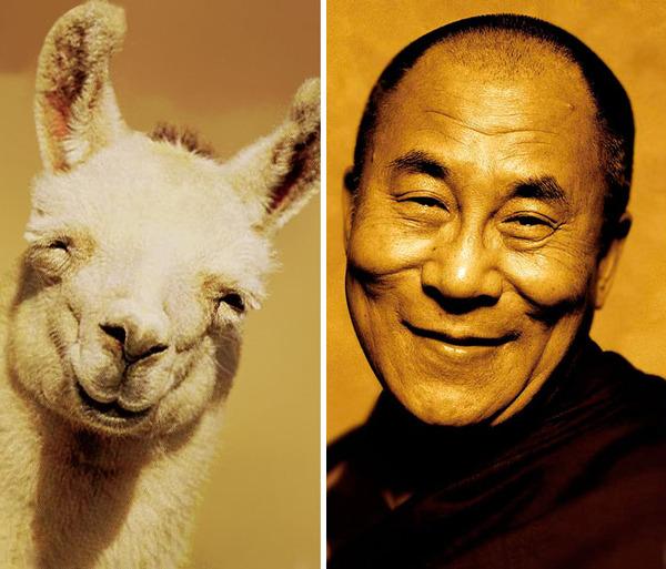 ほぼ完全に一致!海外の有名人とそっくりな動物たち! (24)