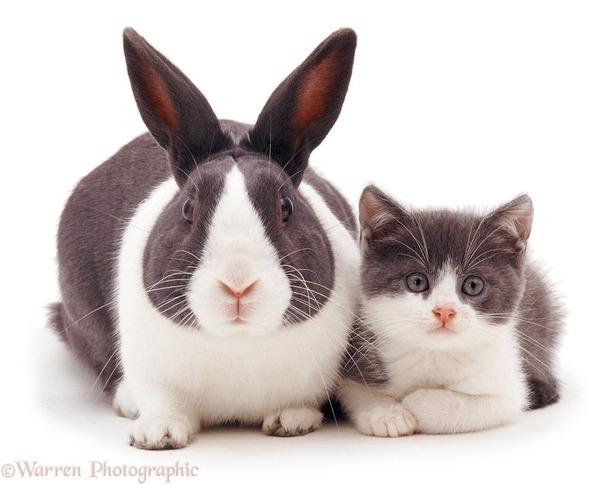似てる!親が違うのにそっくりな動物画像30枚 (4)
