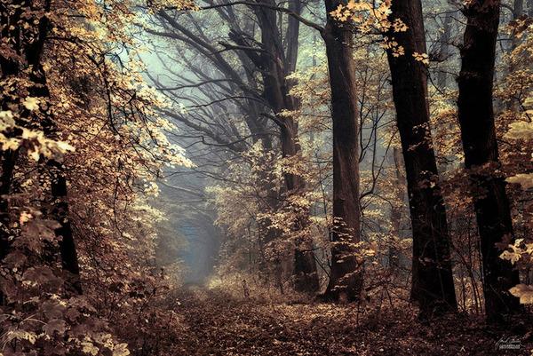 秋といえば紅葉や落葉の季節!美しすぎる秋の森の画像20枚 (17)