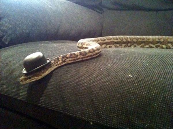なんだこれカワイイぞ!帽子を被ったヘビ画像特集 (9)