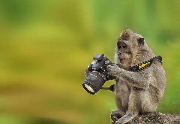 カメラに興味津々な動物の画像 (24)