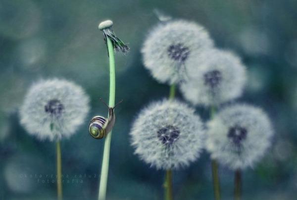 メルヘンチック!カタツムリの小さな世界を激写 (7)