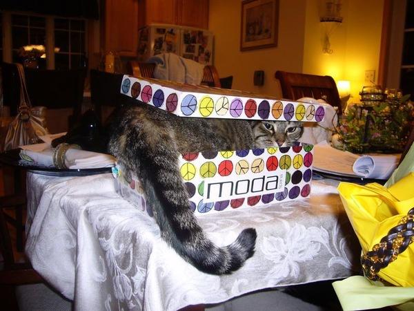 ジャストフィット猫 17