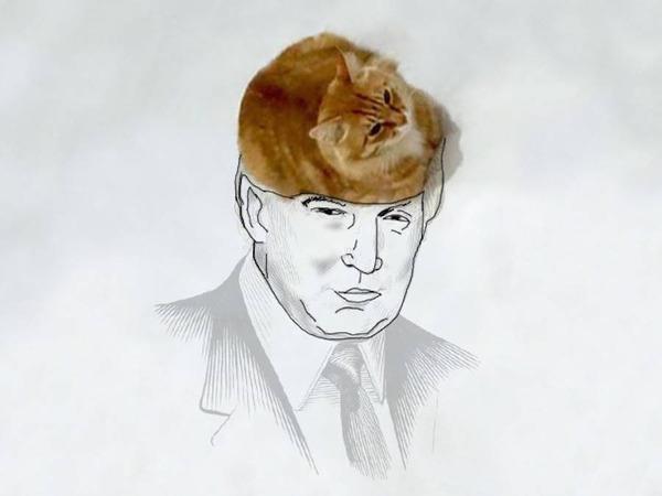 才能の無駄遣い?香箱座りの猫の画像にみんなで落書き! (2)