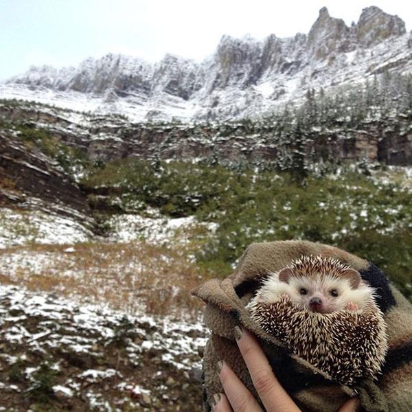 ハリネズミと雪山