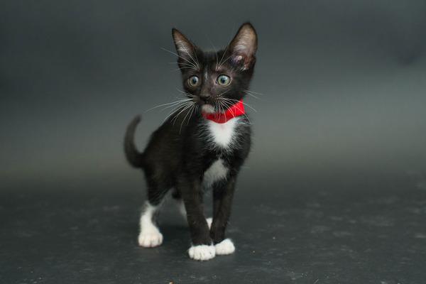 アメリカのアニマルシェルターで里親を待つ黒猫たちの写真 (9)