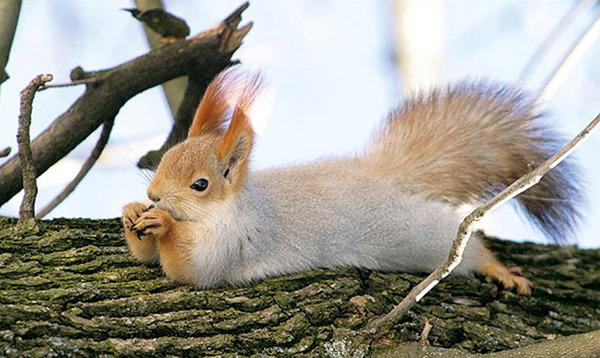 モデルのようにポーズを取る可愛い動物特集 リス 2
