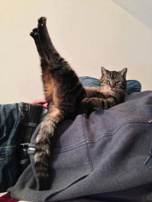 モデルのようにポーズを取る可愛い動物特集 猫 6