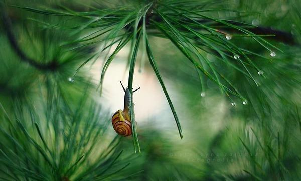 メルヘンチック!カタツムリの小さな世界を激写 (6)