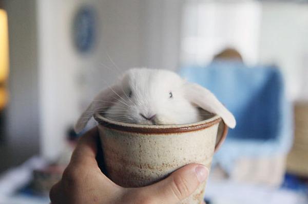 超ふわふわ!モフモフで愛らしいウサギの画像20枚 (17)