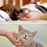 猫みたいにかわいい!?人間にとても懐くペットのトカゲ