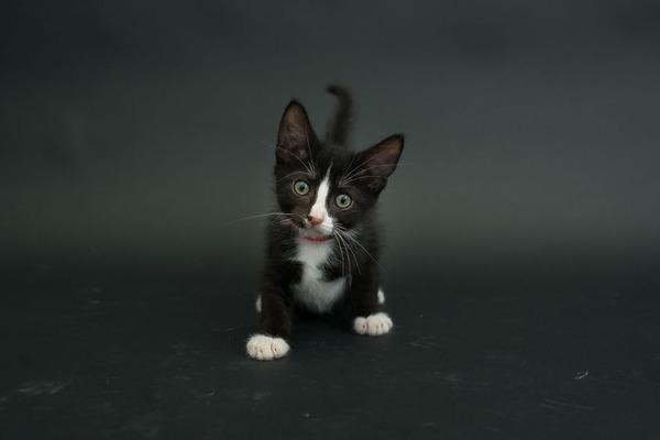 アメリカのアニマルシェルターで里親を待つ黒猫たちの写真 (4)