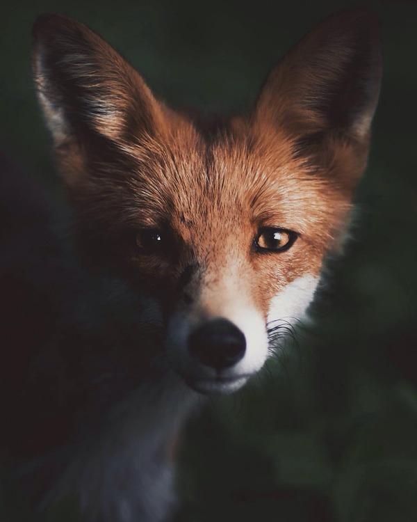 キツネやリスと戯れようぜ!フィンランドの胸キュン野生動物 (6)